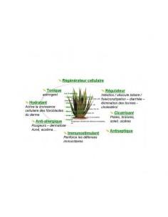 Gel d'Aloe Vera Bio 100gr-Wadi Shibam